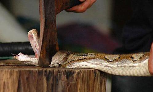 Ular Python
