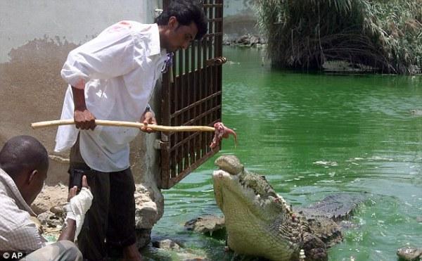 Buaya dianggap hewan suci oleh masyarakat keturunan Afrika-Pakistan di Karachi